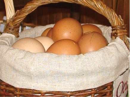Histoire d'œufs