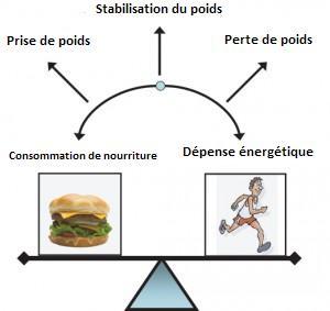 Calories Pour Un Hot Dog Steam Ef Bf Bd